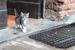 I gatti di Chiaravalle