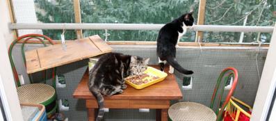 La gattara di calvairate una casa a misura di felino for Misura casa milano