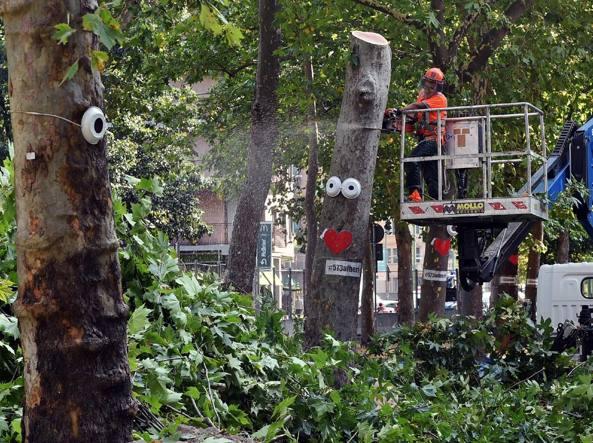 Il taglio degli alberi in via Lorenteggio (Fotogramma)