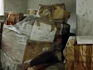 Allarme scarafaggi nei sotterranei del Tribunale di Milano