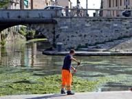 Settembre caldo: e la Darsena viene invasa dalle alghe