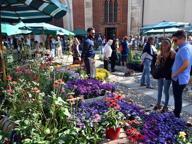 La città si veste di fiori e colori