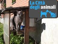 I gatti adottati dal quartiere: vivono nei giardini e giocano con i bimbi