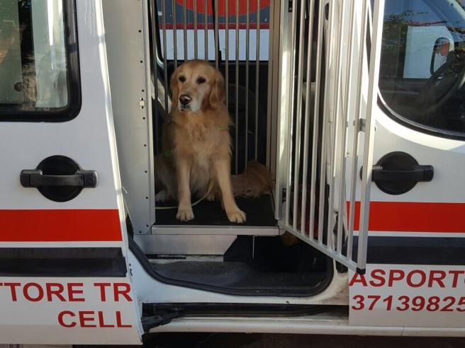 Mortara,  la Croce Rossa lancia l'ambulanza per gli animali Foto